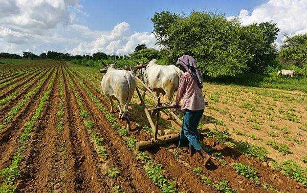 缅甸芒果产业将会迎来新机遇